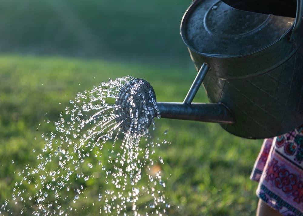 Podlewanie roślin i warzyw zebraną wodą deszczową